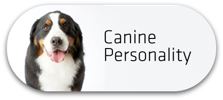 Canine Personality Button
